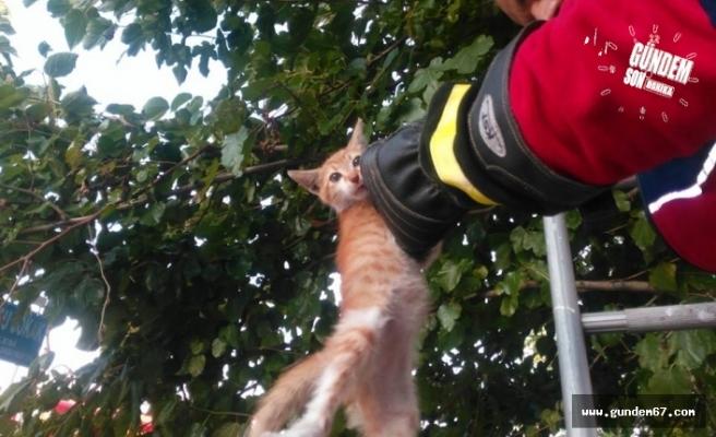 İtfaiyenin kedi şefkâti!..