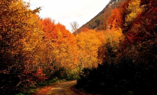 Türkiye'nin en büyük blok ormanlarını barından Yenice'de sonbahar güzelliği