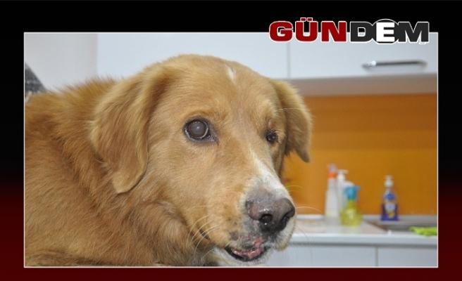 Çenesi kırılmış halde bulunan köpek tedavi altına alındı
