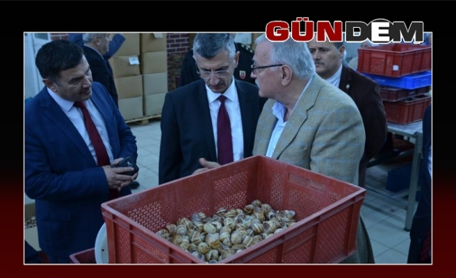 Vali Erdoğan Bektaş, salyangoz fabrikasını gezdi