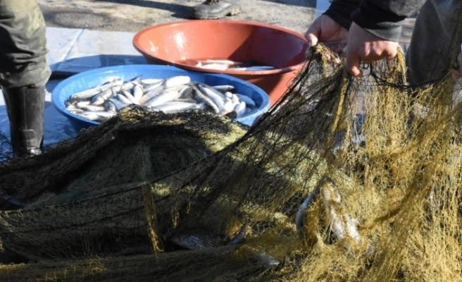 Zonguldaklı balıkçıların kefal sevinci