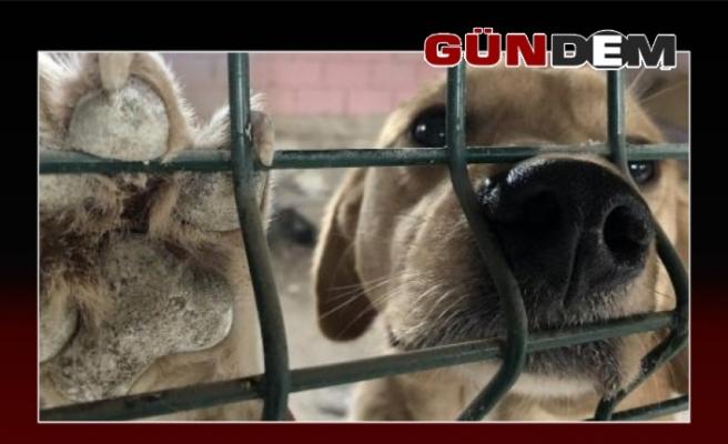 Dolandırıcıların yeni hedefi hayvanseverler!!