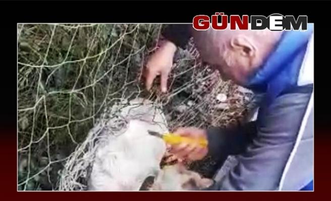 Nefessiz kalan sokak köpeğini vatandaş kurtardı