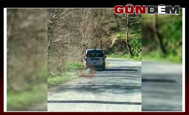 Ölü köpeği 2 kilometre aracının arkasında sürükledi!..