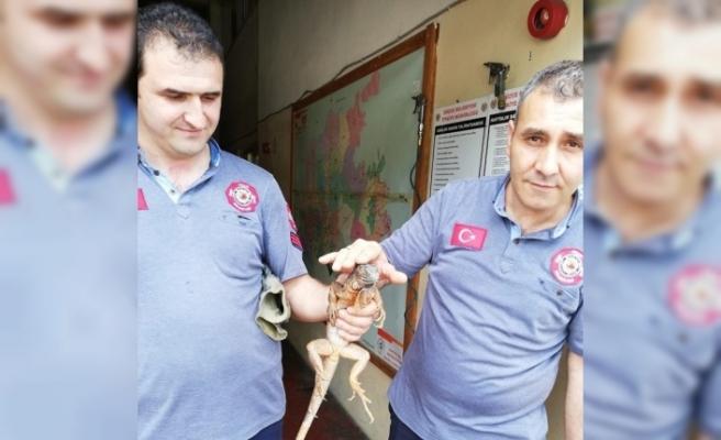 Düzce'de itfaiye ekipleri eşine az rastlanır bir olayla karşılaştı