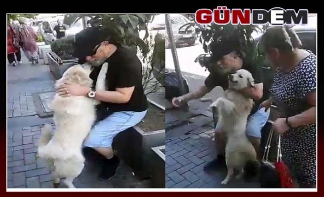 Köpeğin duygusal anları!..