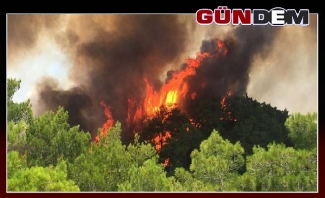 Ormanlar yandı!