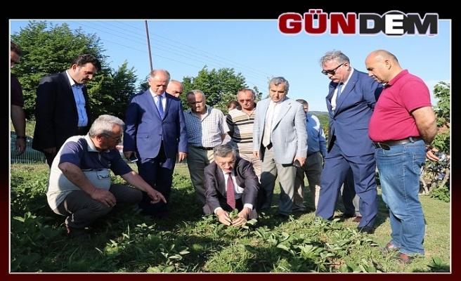 Vali Bektaş,Osmanlı Çileği bahçesini gezdi