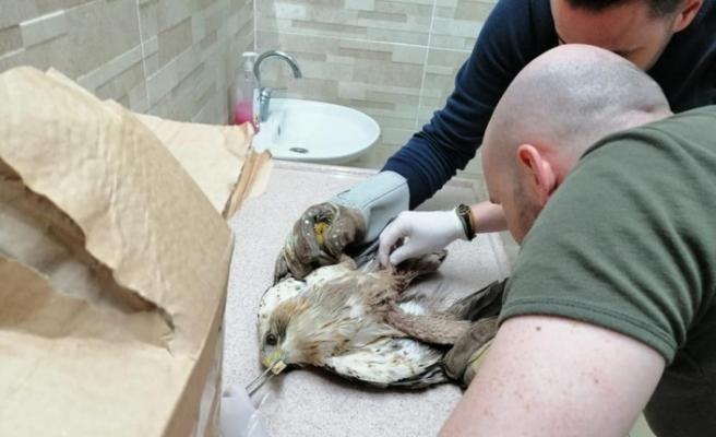 Vücuduna saçma isabet eden yaralı kuş tedavi altına alındı