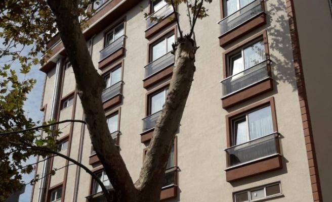 Akçakoca'da tehlike oluşturan ağaçlar budandı