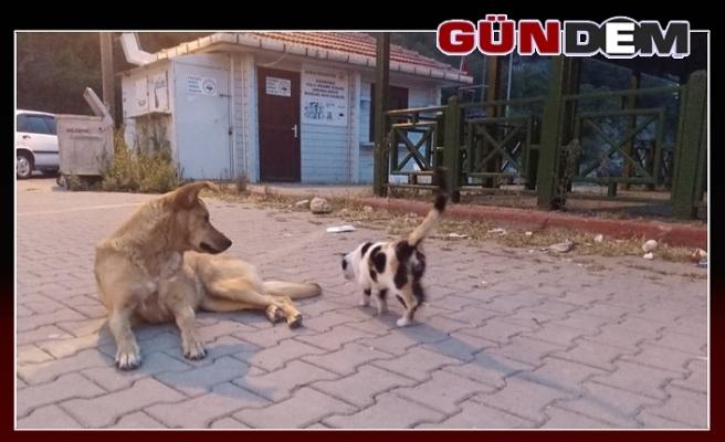 Köpek ve kedinin dostluğu!..