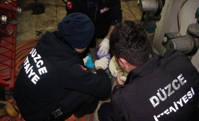 Dereden çıkardıkları yavru kediyi hayata döndürmek için bir saat uğraştılar