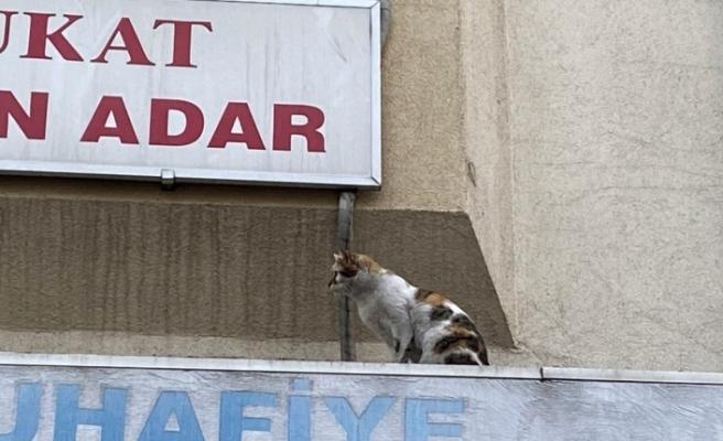 İtfaiye ve mahalle sakinlerinin kedi ile imtihanı
