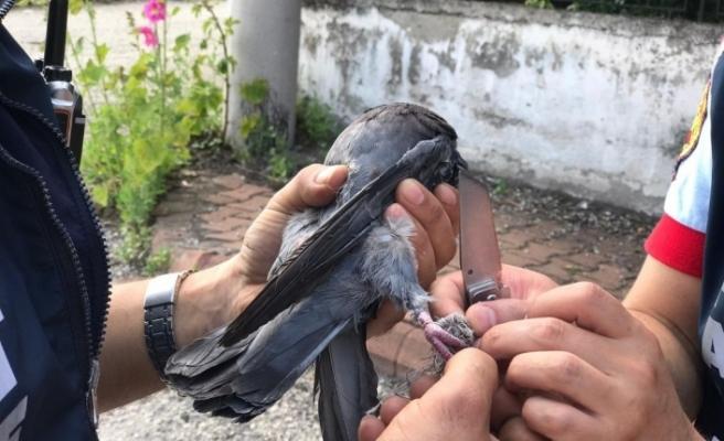 Balkonda fileye takılan güvercini itfaiye kurtardı