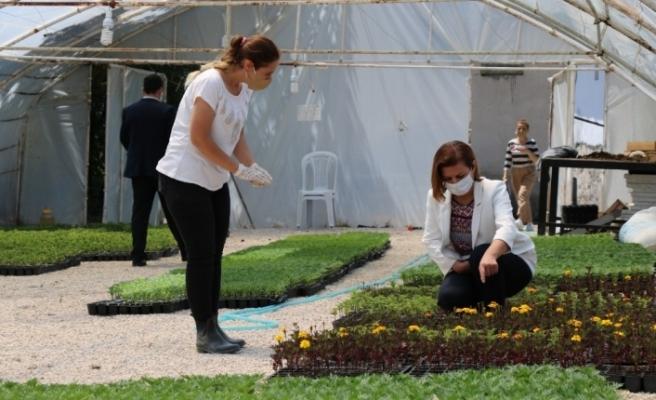 Safranbolu Belediyesi tarım üretimine başladı
