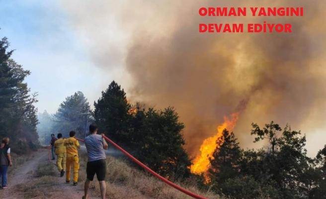 Orman yangını devam ediyor