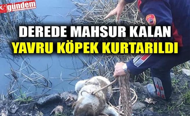 DEREDE MAHSUR KALAN YAVRU KÖPEK KURTARILDI