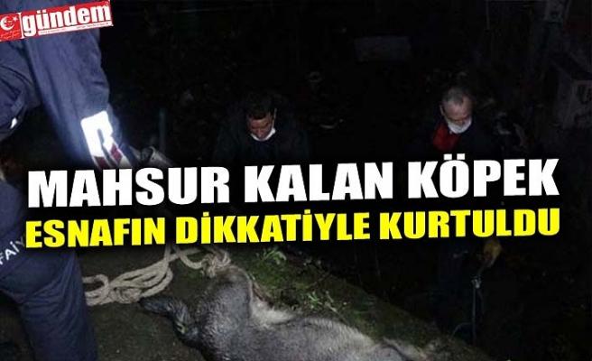 """MAHSUR KALAN KÖPEK """"ESNAFIN DİKKATİYLE KURTULDU"""