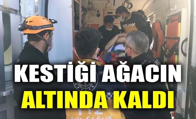 KESTİĞİ AĞACIN ALTINDA KALDI