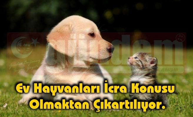 4 köpek türünün Türkiye'ye girişi yasaklanıyor