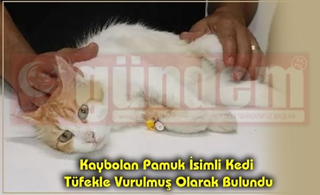 Kaybolan Pamuk İsimli Kedi Tüfekle Vurulmuş Olarak Bulundu.