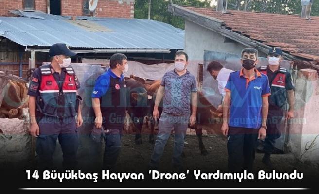 14 Büyükbaş Hayvan 'Drone' Yardımıyla Bulundu