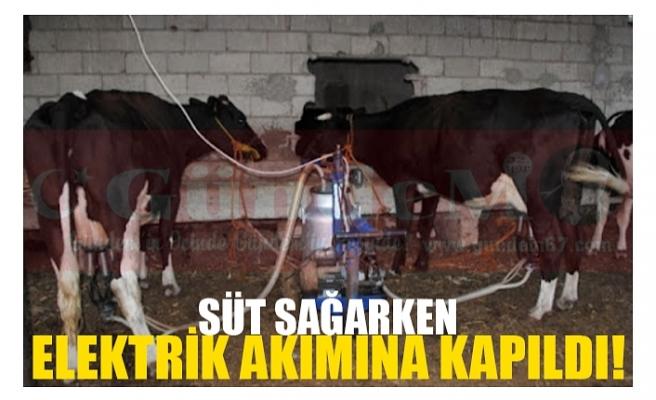 SÜT SAĞARKEN  ELEKTRİK AKIMINA KAPILDI!