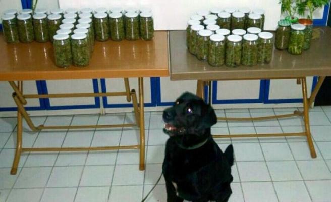Zonguldak´ta uyuşturucu operasyonu