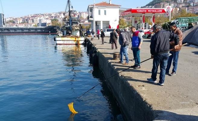 Karadeniz'de deniz suyunun aniden soğuması balıkları şoka soktu