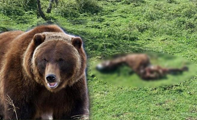 Eşeğe ayı saldırdı... Köylü tedirgin