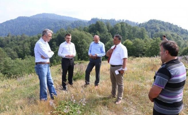 Bal üretim ormanı kuruluyor