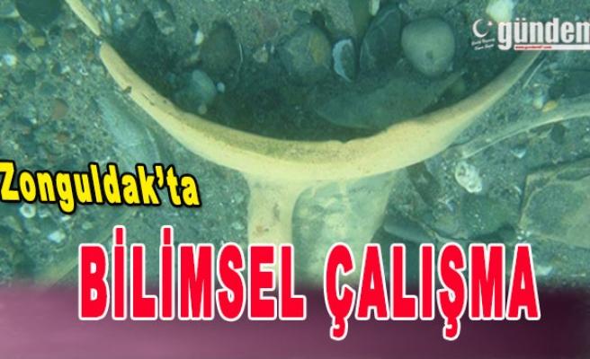 Zonguldak'ta Bilimsel Çalışma