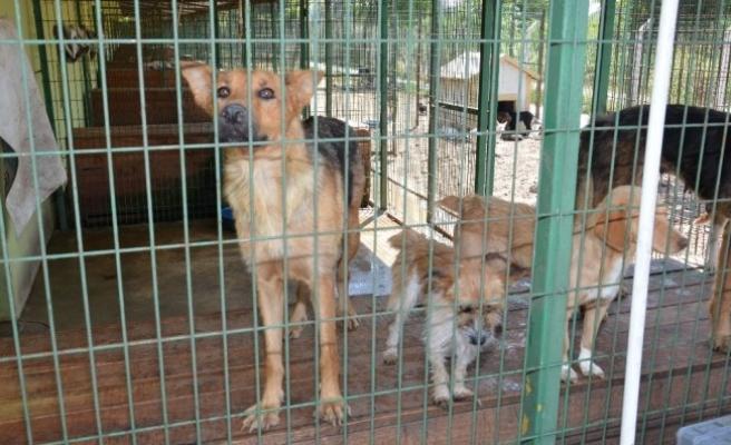 Hayvan Rehabilitasyon Merkezi' yapılması için işbirliği
