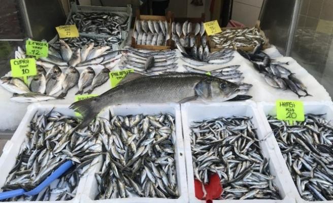 Balıkçı ağlarına 10 kiloluk levrek yakalandı