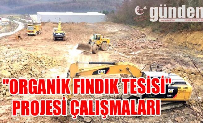 """""""Organik Fındık Tesisi"""" projesi çalışmaları"""