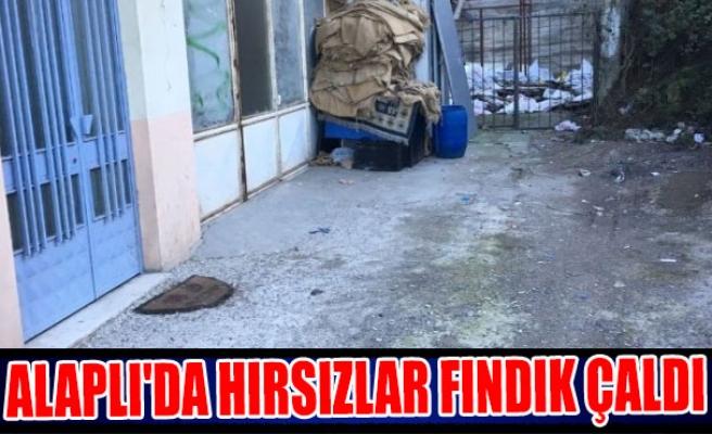Alaplı'da hırsızlar fındık çaldı