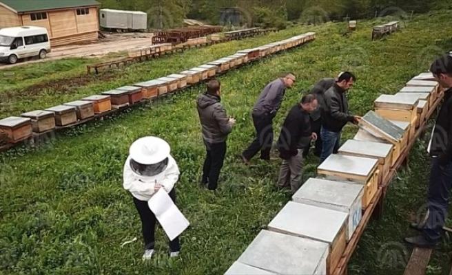 Yığılca'da organik bal üretimine geçilecek