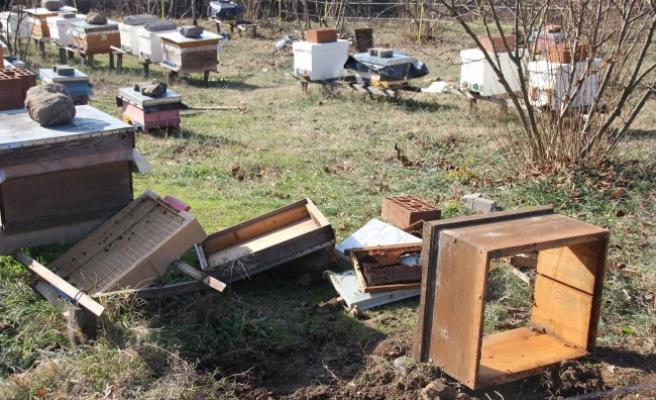 Düzce'de ayılar arı kovanlarına zarar verdi