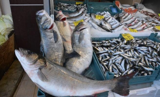 Amatör Balıkçılar Levrek Sevinci Yaşadı