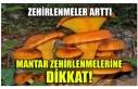 MANTAR ZEHİRLENMELERİNE DİKKAT!