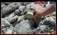 Alaplı 'da fosil bulundu...