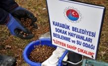 Belediye sokak hayvanlarını bayramda da unutmadı
