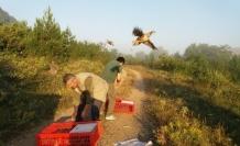 Karabük'te Kınalı Keklikler doğayla buluştu