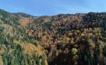 Türkiye'nin en büyük blok ormanları fotoğraf tutkunlarını bekliyor