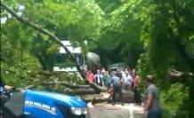 Yola devrilen ağaç ulaşımı aksattı