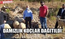 DEVREK'TE BESİCİLERE 20 ADET KOÇ DAĞITILDI
