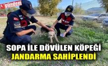 SOPA İLE DÖVÜLEN KÖPEĞİ JANDARMA SAHİPLENDİ