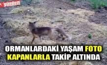 ORMANLARDAKİ YAŞAM FOTO KAPANLARLA TAKİP ALTINDA