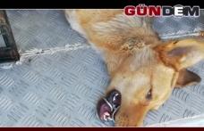 Ağzına Çelik Halka Sıkışan Köpeği AFAD Kurtardı