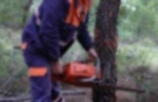 Kestiği ağacın altında kadı